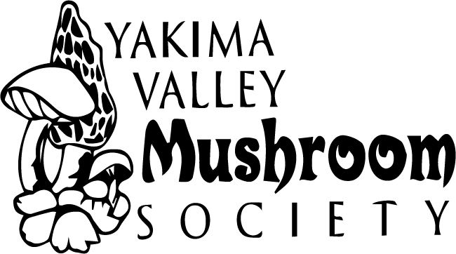 YVMS logo